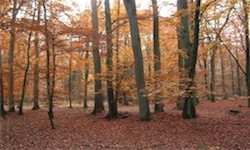 Herbstwald in Hitzacker